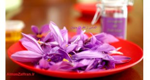 پیاز زعفران تزئینی