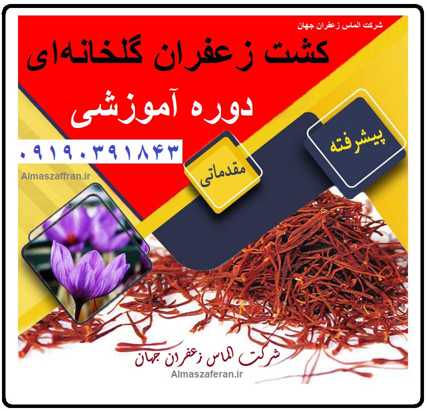 کشت زعفران گلخانه ای آیروپونیک
