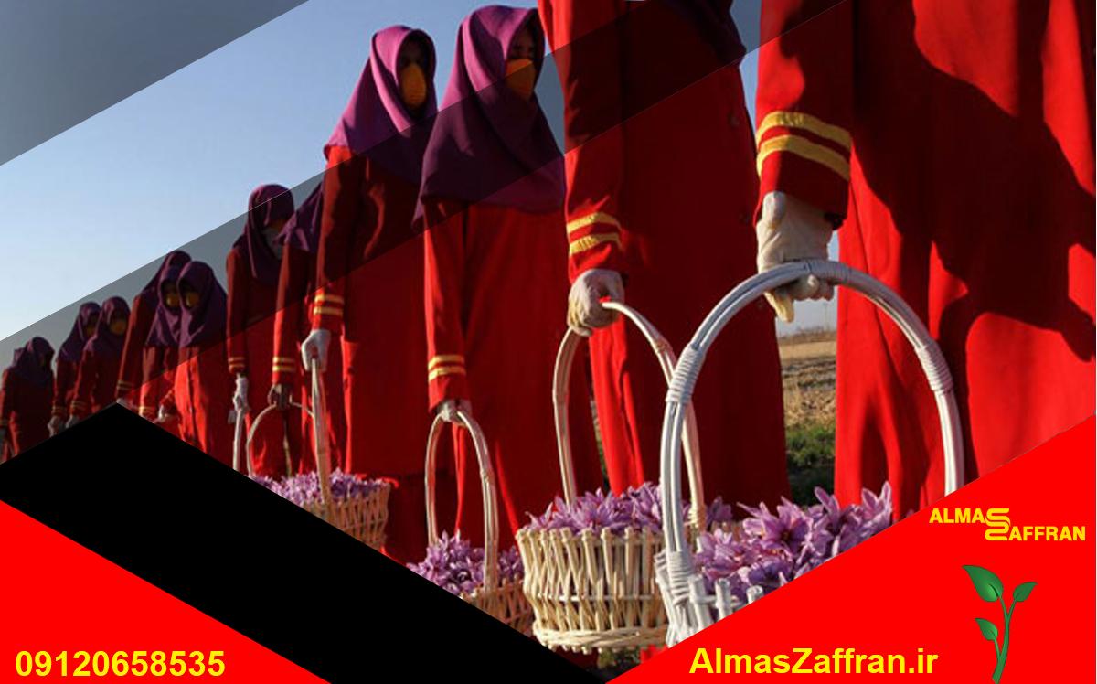تولید زعفران در ایران و فروش زعفران در بازار زعفران