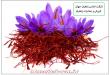 ویژگی های زعفران افغانستان