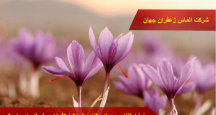 قیمت روز زعفران صادراتی در بازار