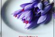 فروش عمده زعفران صادراتی در بازار