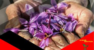 buy-saffron-from-a-farmer