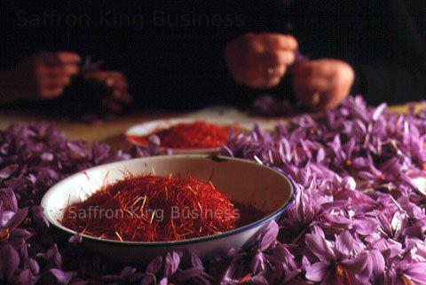 قیمت خرید زعفران از کشاورز در سال 98