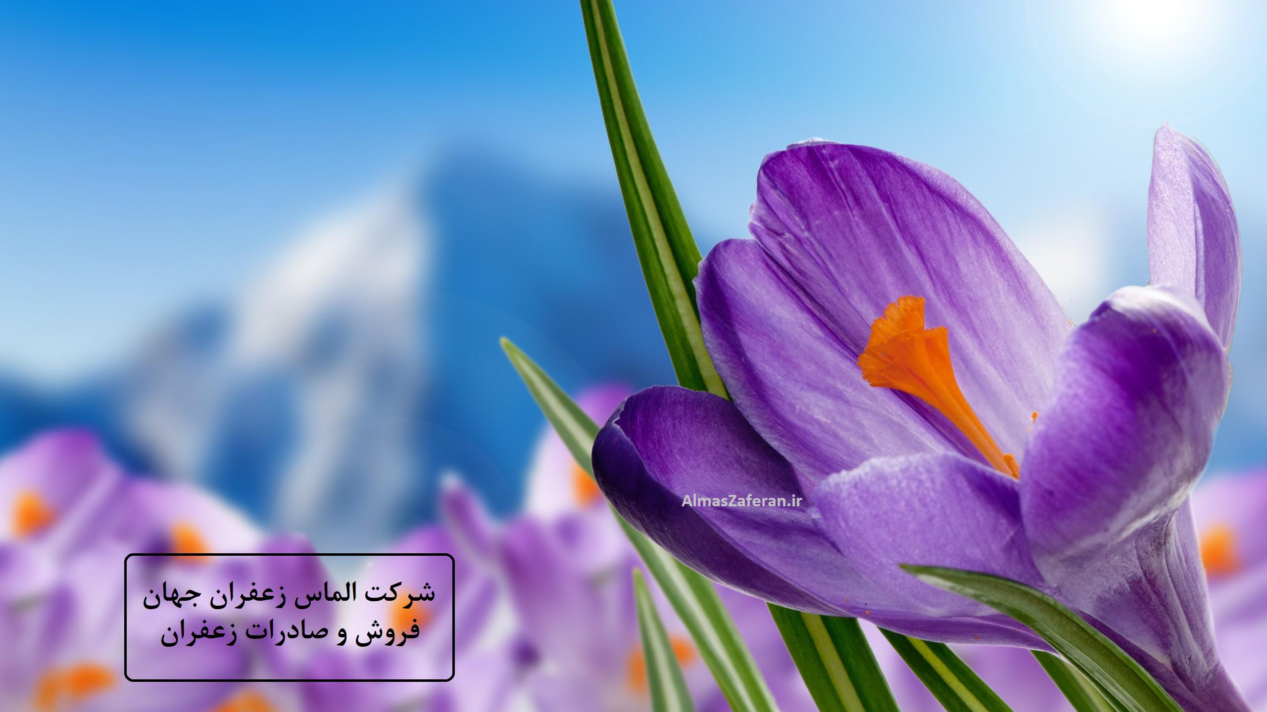 قیمت زعفران صادراتی فله در بازار زعفران