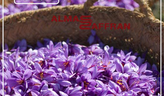 کاشت زعفران و قیمت خرید زعفران از کشاورز