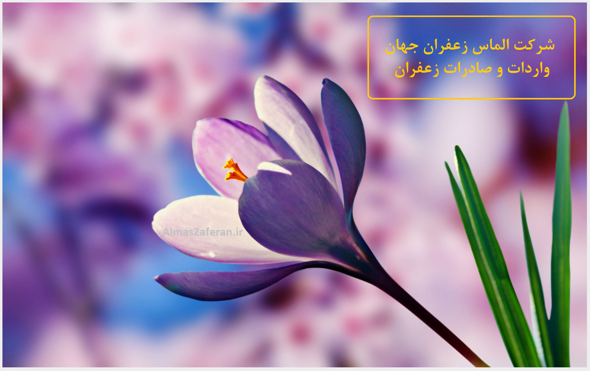 نوسانات قیمت فروش و خرید زعفران