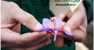 تولیدکنندگان زعفران در جهان