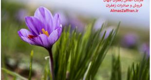 فروش زعفران عمده در بازار عمده فروشان زعفران