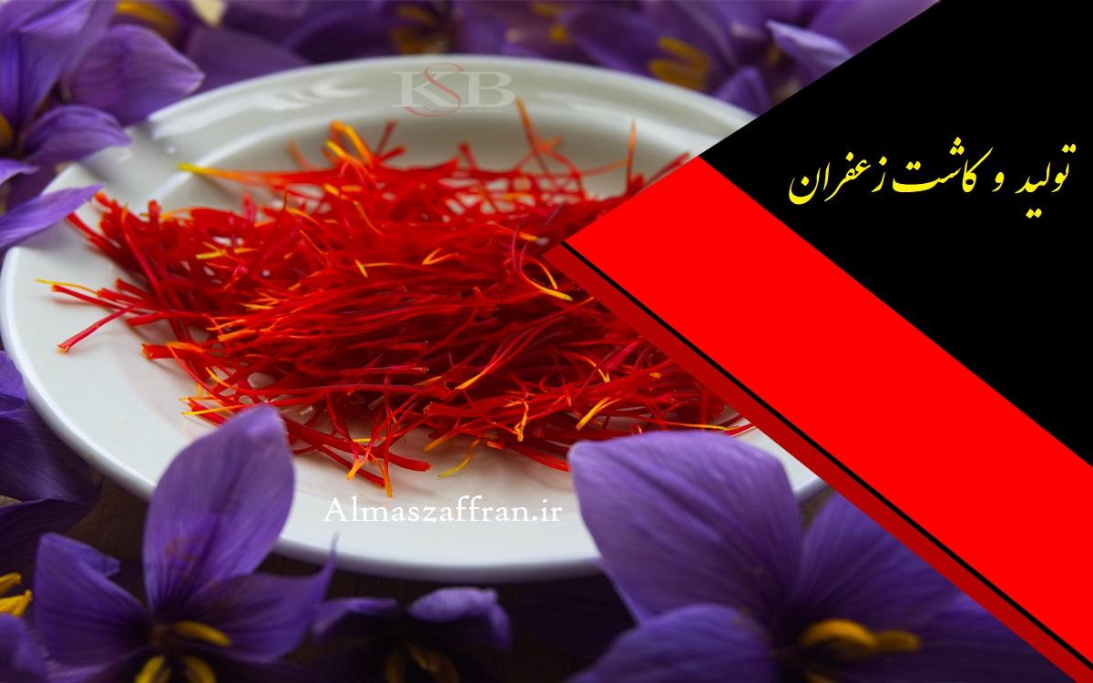 قیمت خرید زعفران اصل از کشاورز