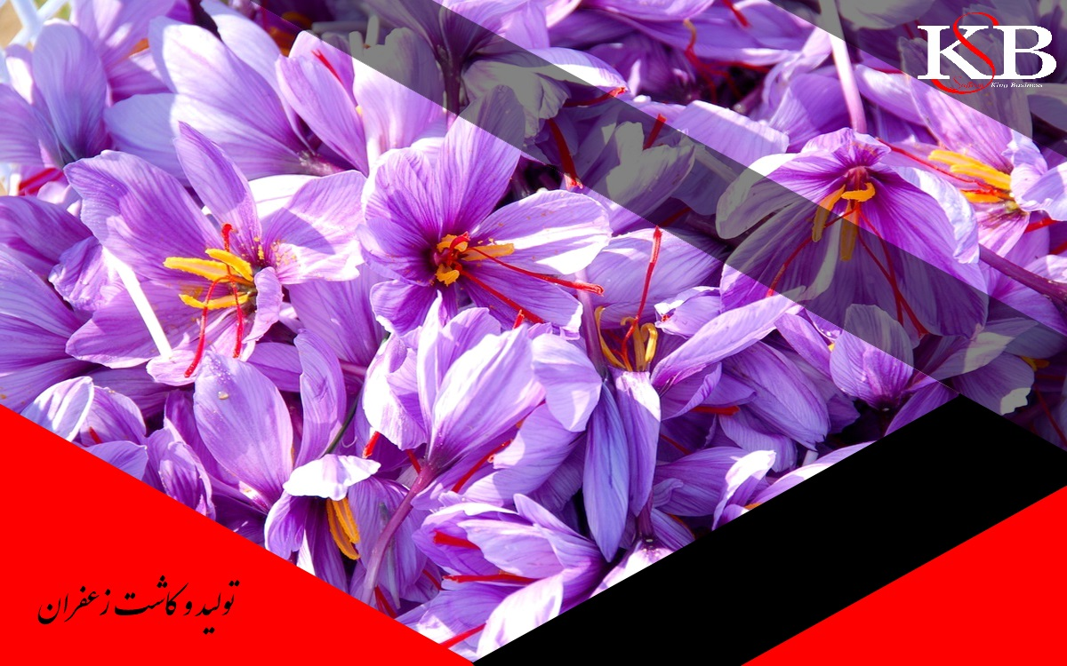 تفاوت قیمت انواع زعفران در بهترین برند های زعفران چیست؟