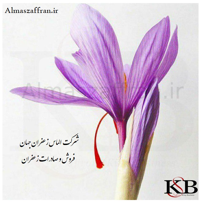 sale-of-premium-saffron-negin-mumtaz